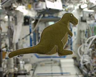 NASA astronaut Karen Nyberg's stuffed toy dinosaur floats on the International Space Station. She made the doll for her son using materials she found on the orbiting outpost. (NASA)