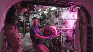 ISS_Lettuce3